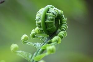 """Farn - hier als Symbol im Seminar """"Resilienz stärken"""" von Dipl.-Psych. Anna-Maria Steyer"""